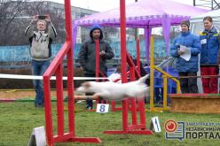 В Павлограде собаки соревновались в прохождении полосы препятствий (ФОТО)