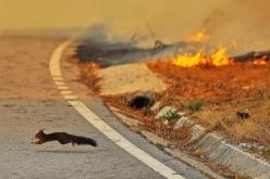 Спасатели Павлограда заявили об умышленном поджоге 1 га сухой травы и камыша
