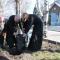 В Западном Донбассе высадили около 200 сакур