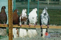 В Павлоград привезли голубей из более чем 10 городов и сёл Украины (ФОТОРЕПОРТАЖ)