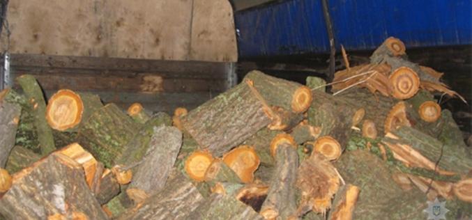 Полицейские пресекли вырубку деревьев в лесополосе (ФОТО)