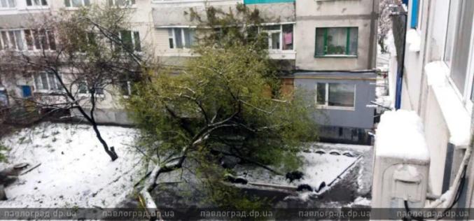 В Павлограде зафиксировано более 30 случаев падения деревьев на машины, провода, балконы