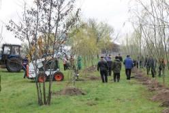 Вдоль ул. Днепровской высадили молодые деревья
