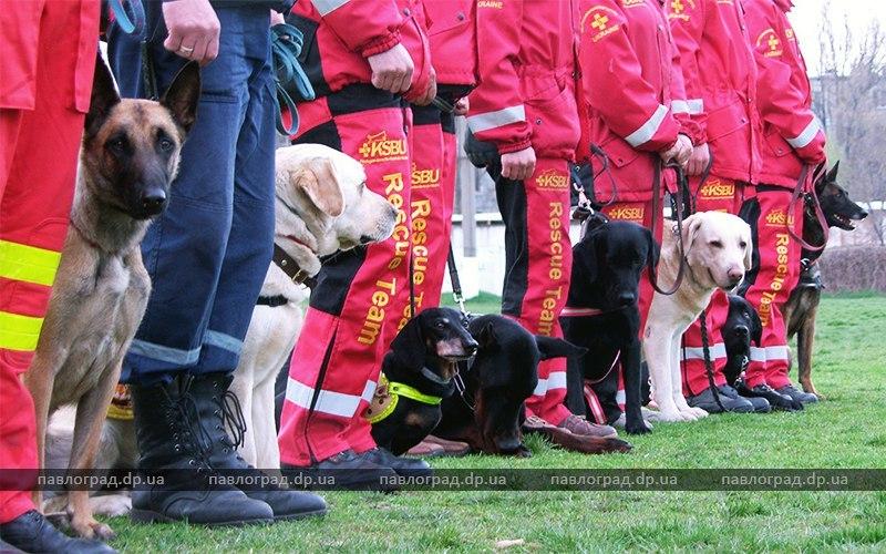 В Павлограде проходят Национальные соревнования собак-спасателей