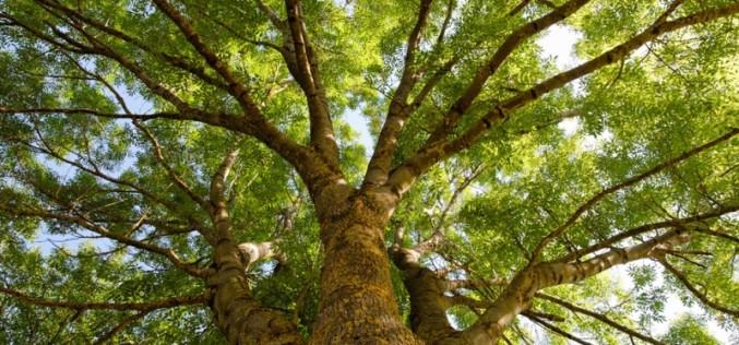 Павлоградские деревья нуждаются в … паспортах