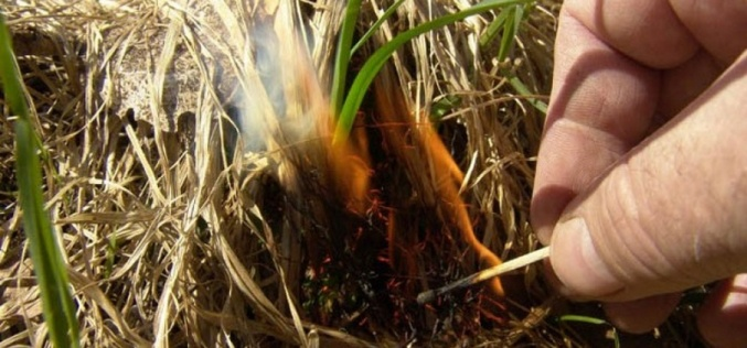 Причиной возгорания Павлоградского лесхоза называют поджог