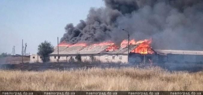 В Павлограде сгорела брошенная свиноферма
