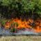 Из-за лесных пожаров Павлоградщина может остаться без детских лагерей