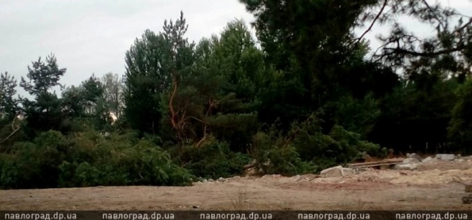 Полиция начала следствие по факту вырубки леса на ПЗТО (ОБНОВЛЕНО)