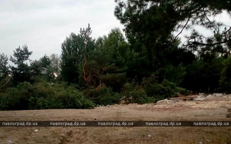 В Павлограде рубят лес — на его месте будет торговый центр (ФОТО и ВИДЕО)
