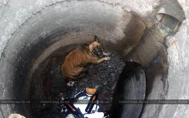 В Павлограде волонтер спасла собаку, упавшую в открытый люк (ФОТО и ВИДЕО)