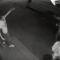 Преступление пьяных хулиганов попало в объектив камеры наблюдения (ВИДЕО)