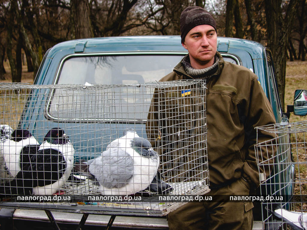 Выставка ярмарка голубей и других птиц. г Павлоград, 02.03. 2019
